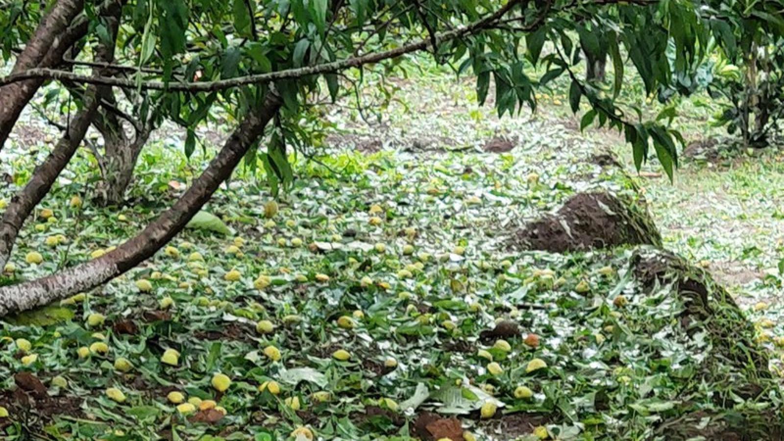 Lại xảy ra mưa đá, gió lốc tại Lai Châu gây thiệt hại nặng nề