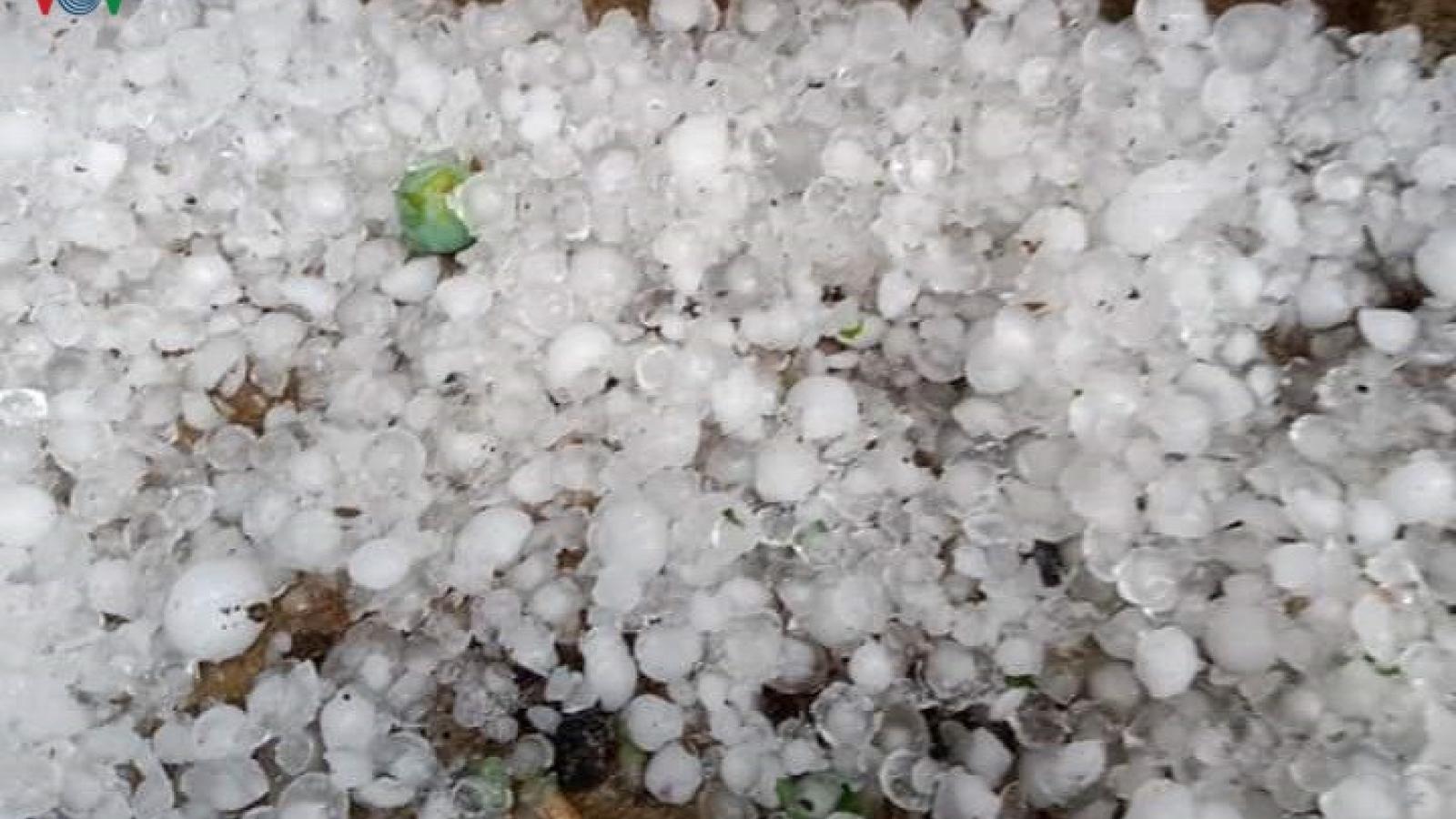 Mưa đá lớn làm thiệt hại hoa màu trên địa bàn huyện Kỳ Sơn, Nghệ An