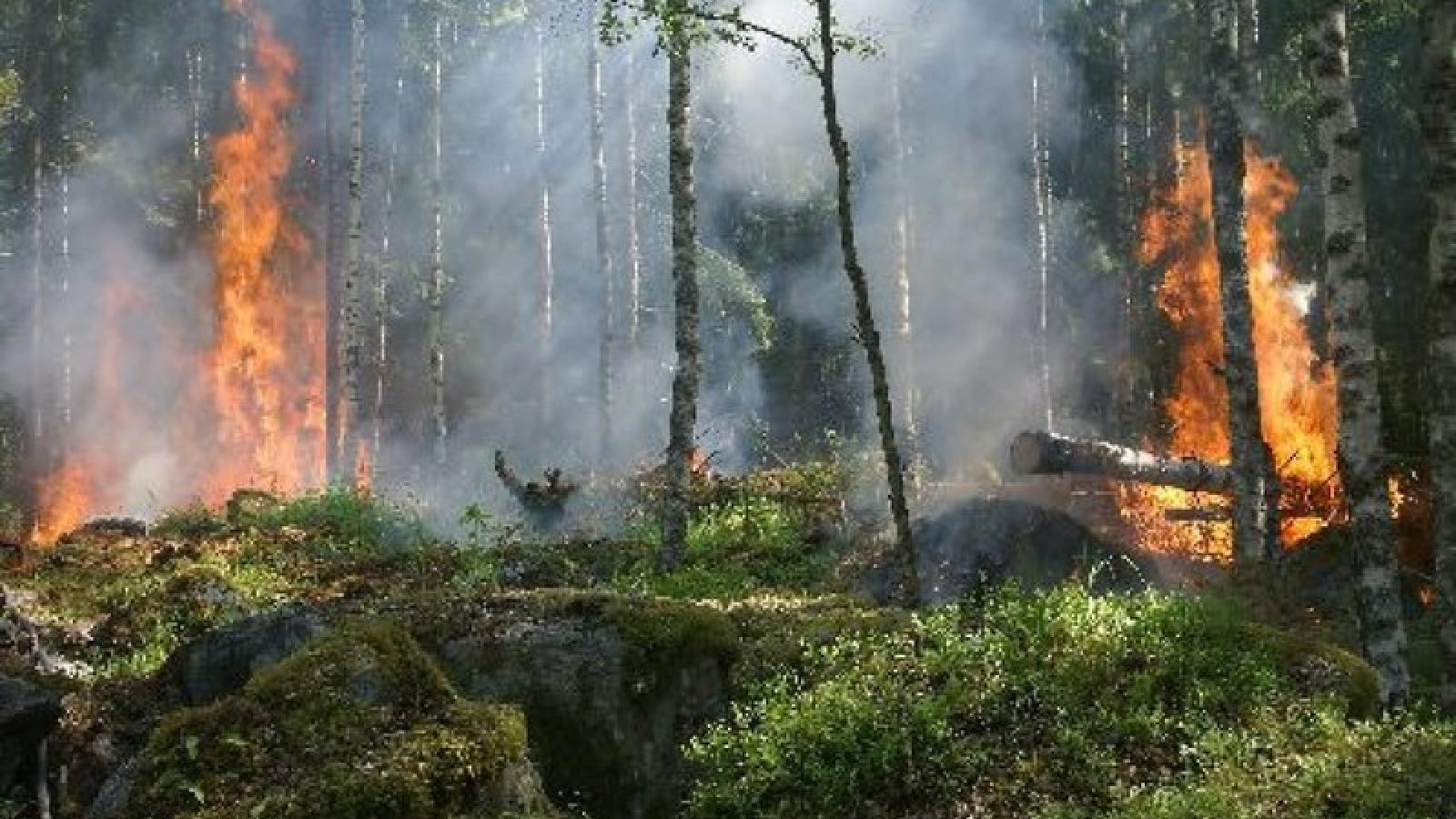 Ba Lan đối mặt vụ cháy rừng lớn nhất trong vòng 100 năm