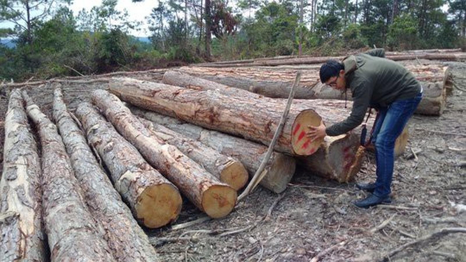 Kon Tum thành lập đoàn kiểm tra thông tin có phá rừng quy mô lớn