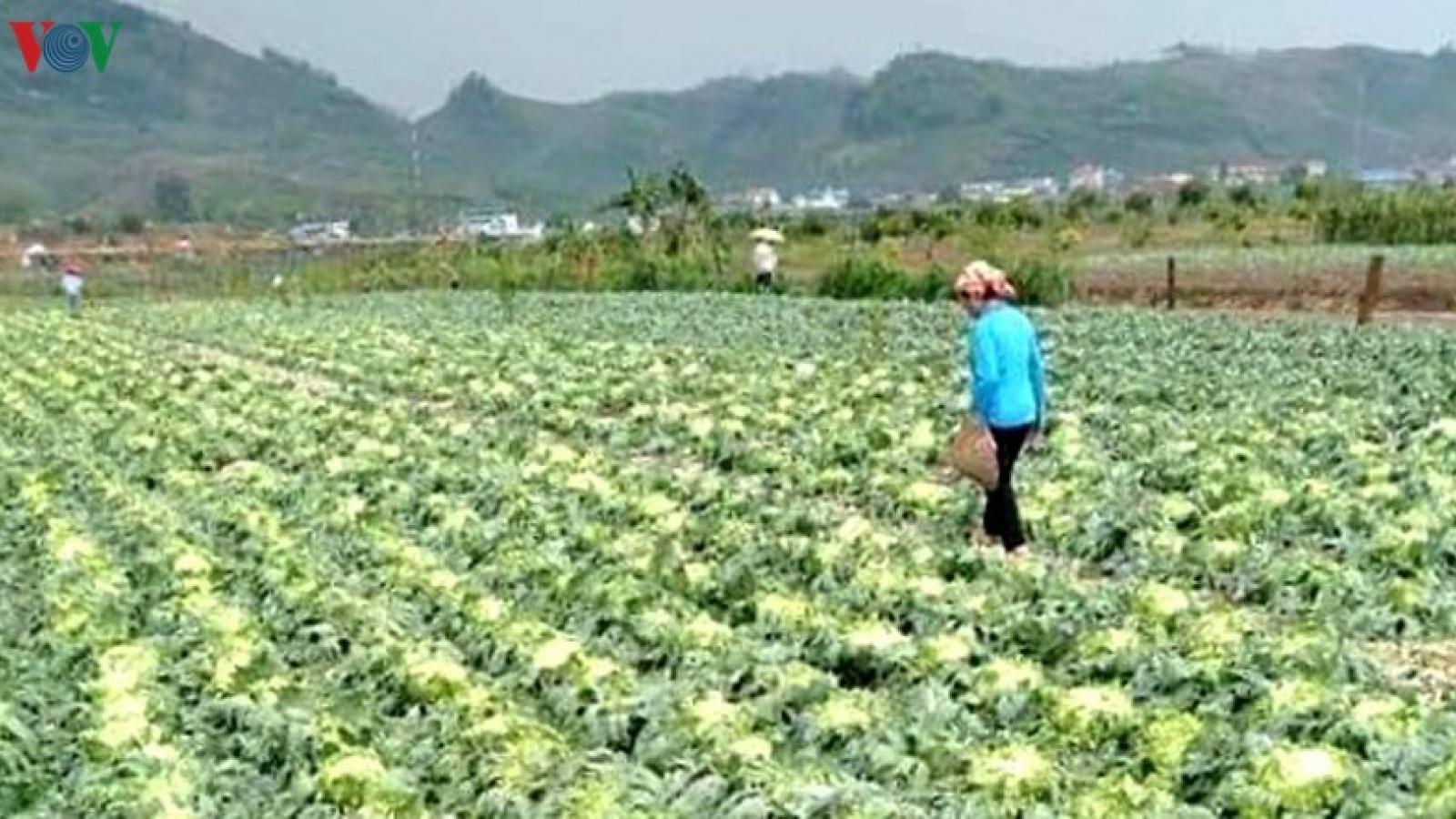 Mưa đá ở Yên Châu (Sơn La) gây thiệt hại khoảng 4,5 tỷ đồng