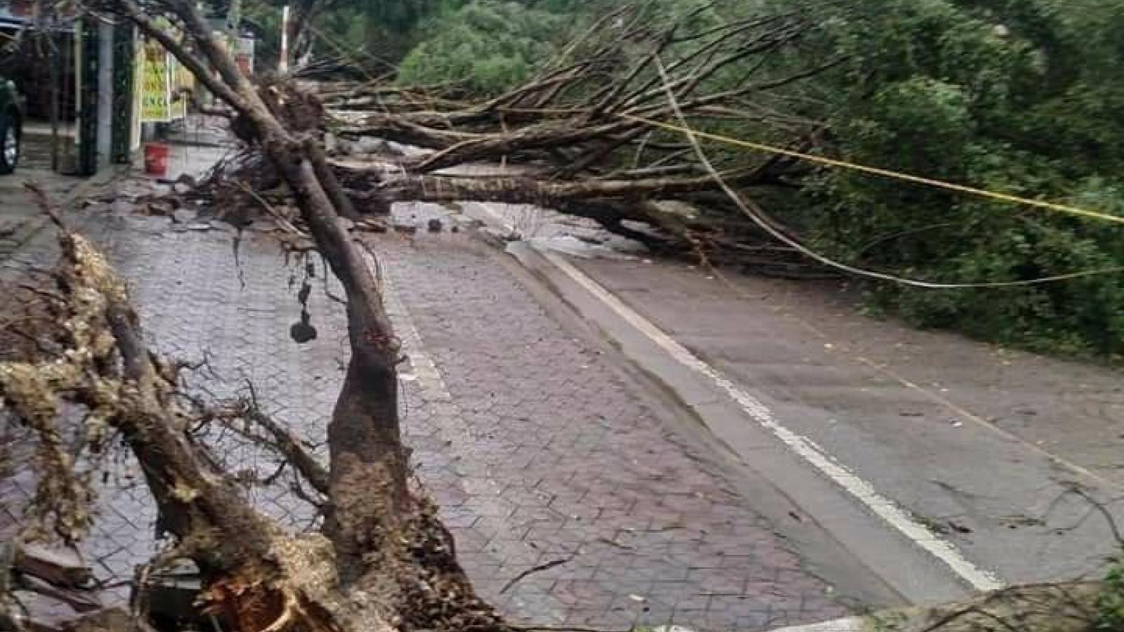 Nhiều cây cối, cột điện, nhà dân bị ảnh hưởng sau mưa dông ở Lào Cai
