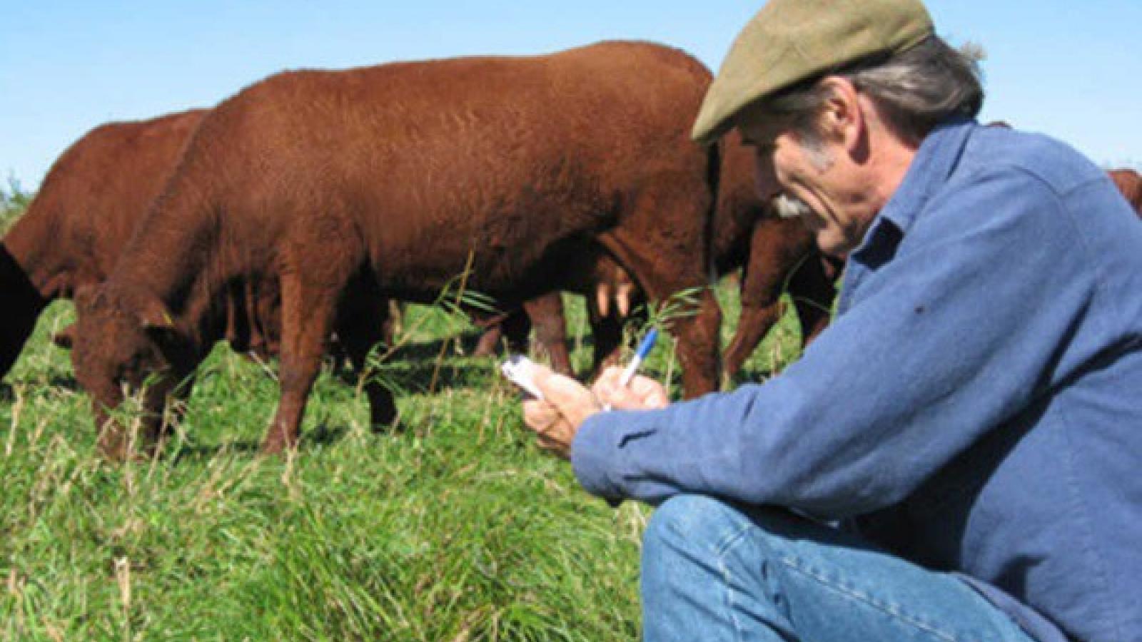Nông dân Mỹ tiêu hủy hàng ngàn gia súc, hàng triệu gia cầm do Covid-19