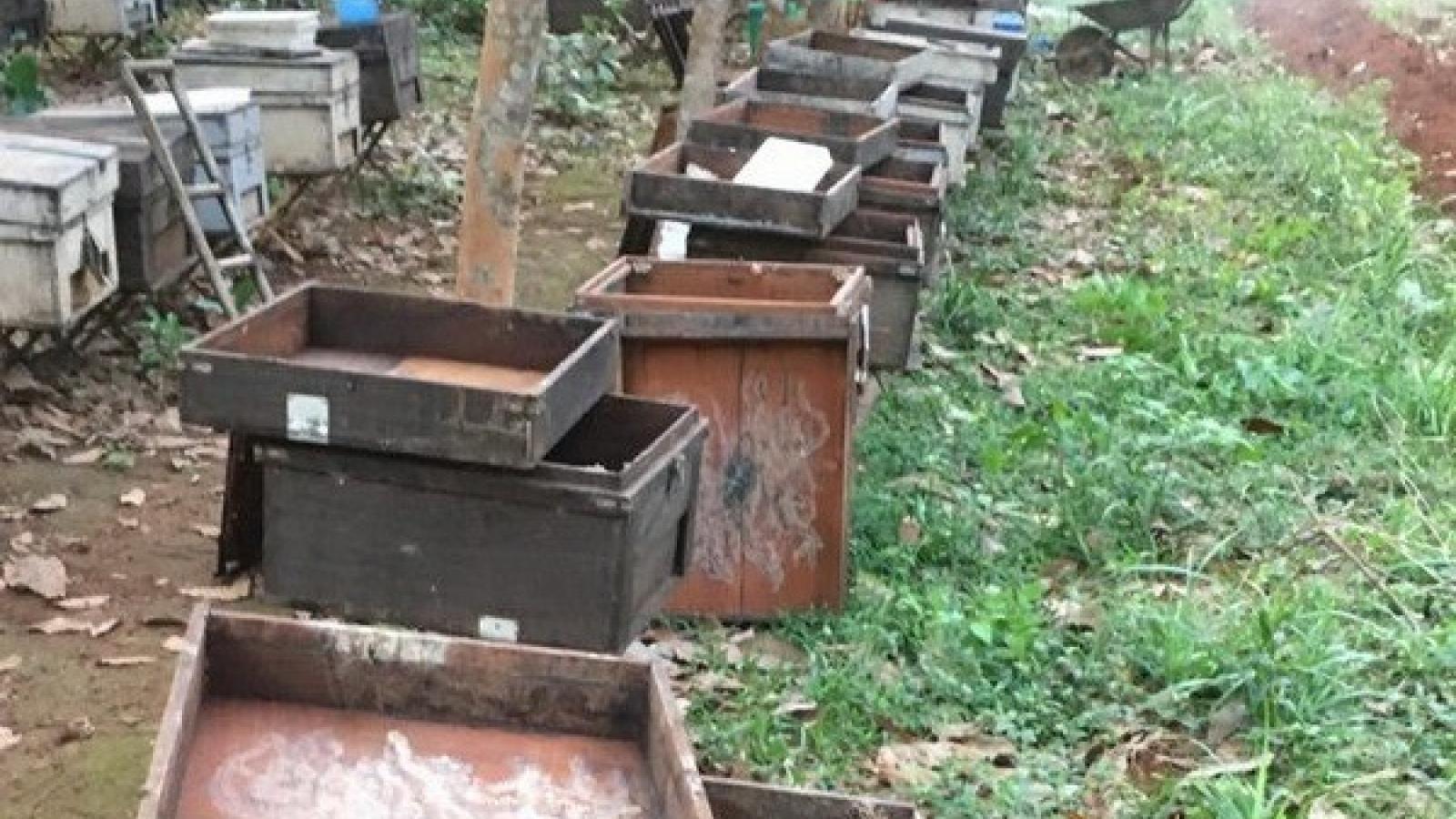 Điều tra vụ 315 thùng nuôi ong của 1 hộ nông dân nghi bị đầu độc