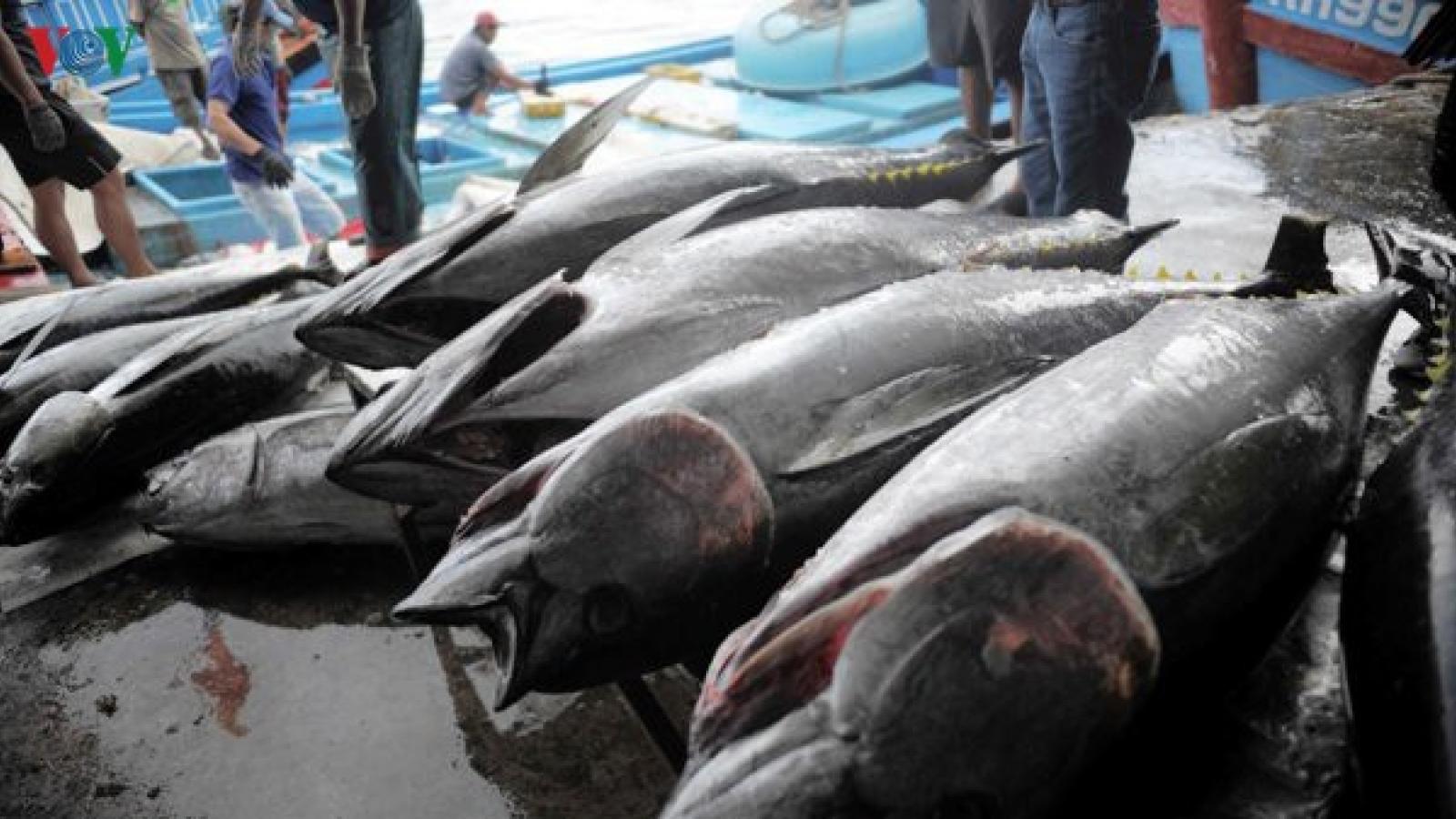 Khai thác thủy sản gặp khó, ngư dân không muốn ra khơi