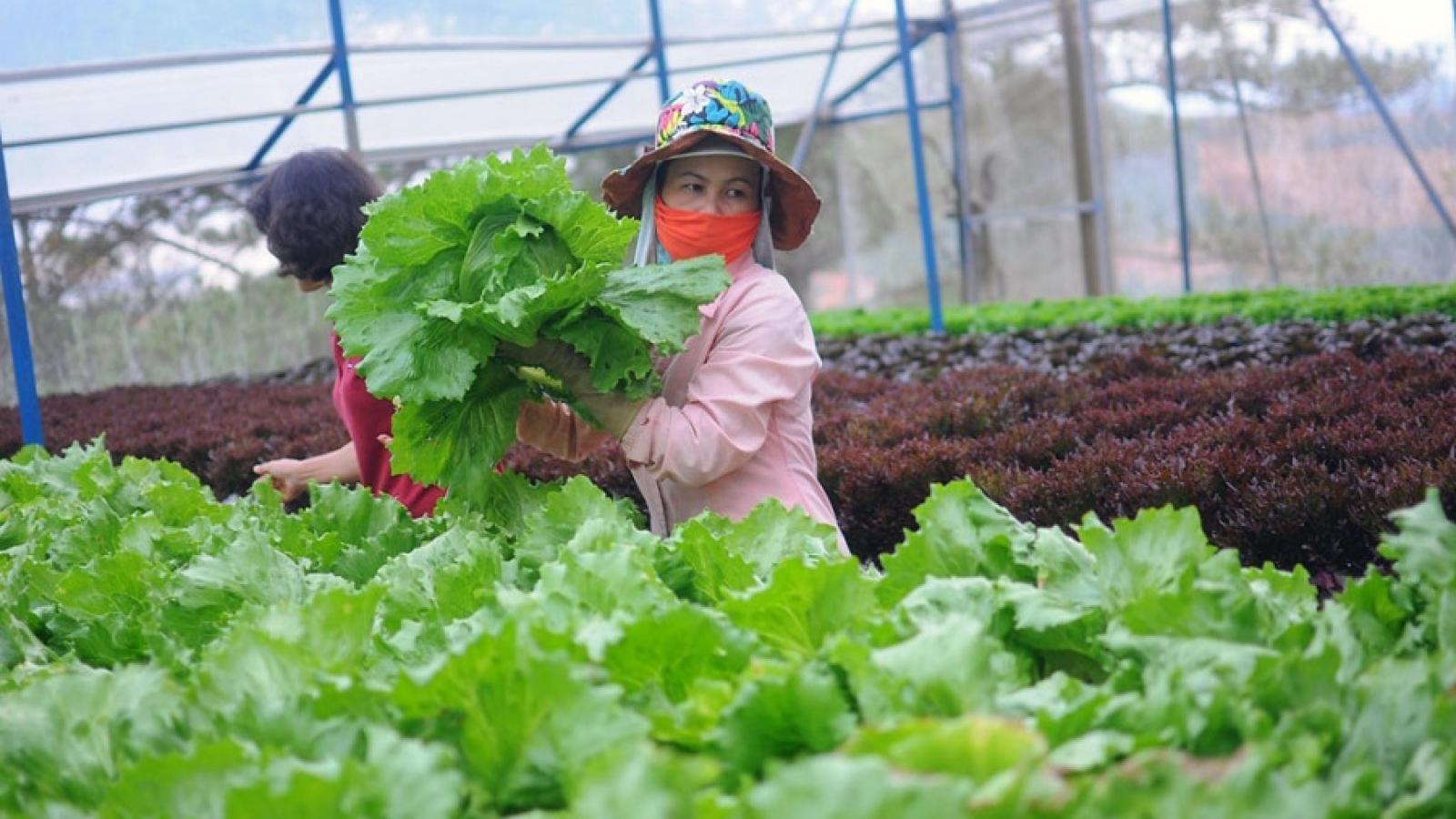 Sản xuất liên kết theo chuỗi, nông sản Lâm Đồng nhẹ nhàng ứng phó dịch Covid-19