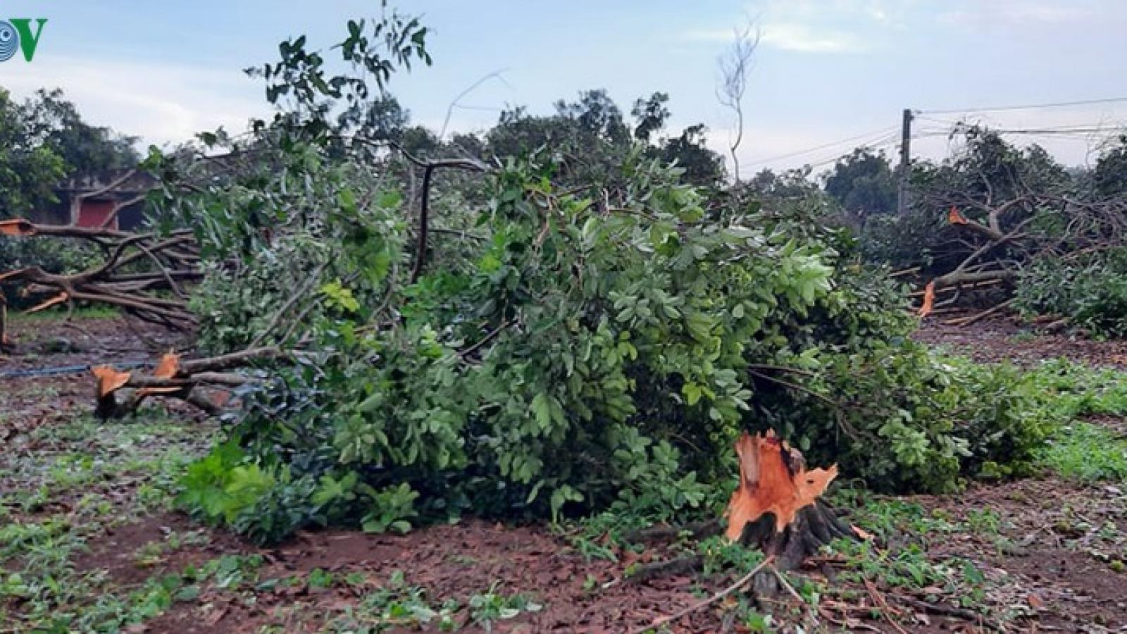 Lốc xoáy, mưa đá khiến hàng trăm gốc chôm chôm, sầu riêng ở Đồng Nai gãy đổ
