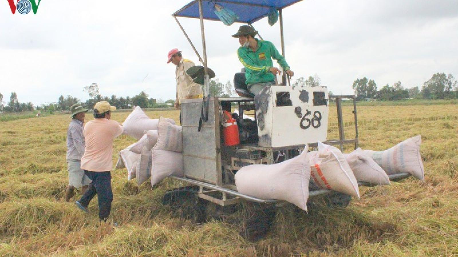 Doanh nghiệp than phiền vì không xuất khẩu được gạo