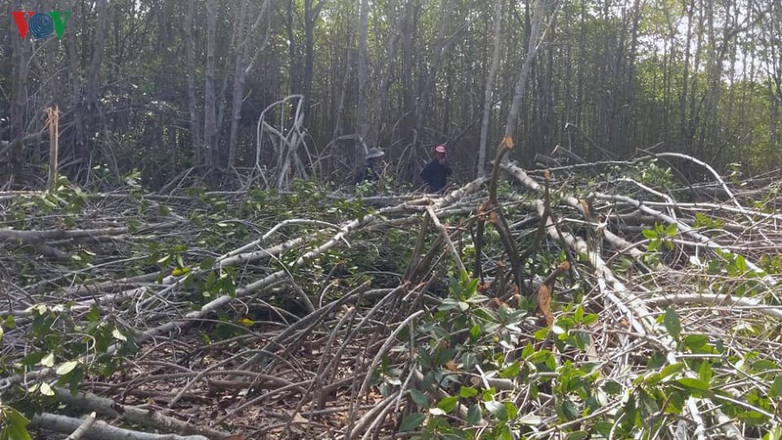 Tạm dừng dự án phá rừng phòng hộ, kiểm điểm tổ chức cá nhân vi phạm