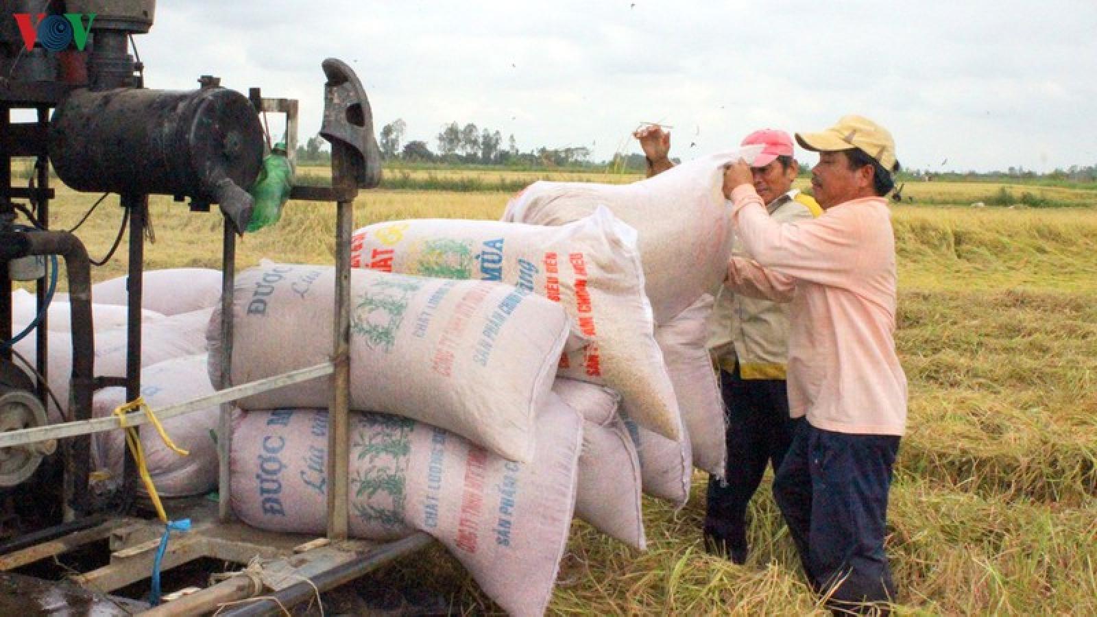 Kiến nghị xuất khẩu gạo nếp không tính vào hạn ngạch 400.000 tấn