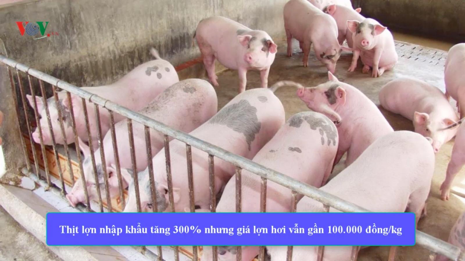 Thịt lợn nhập khẩu tăng 300%, giá lợn hơi vẫn tiến sát 100.000 đồng/kg