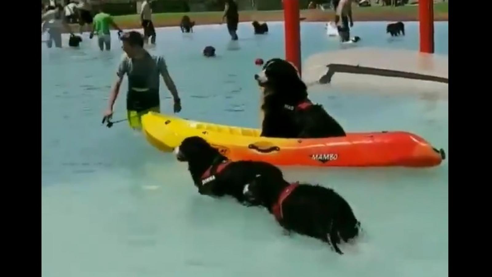 Video: Lũ chó phấn khích vùng vẫy trong công viên nước
