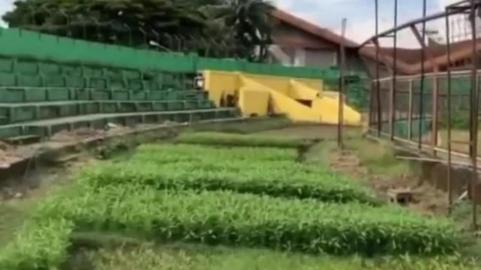 Chuyện lạ: Sân bóng ở Indonesia biến thành vườn rau mùa dịch Covid-19