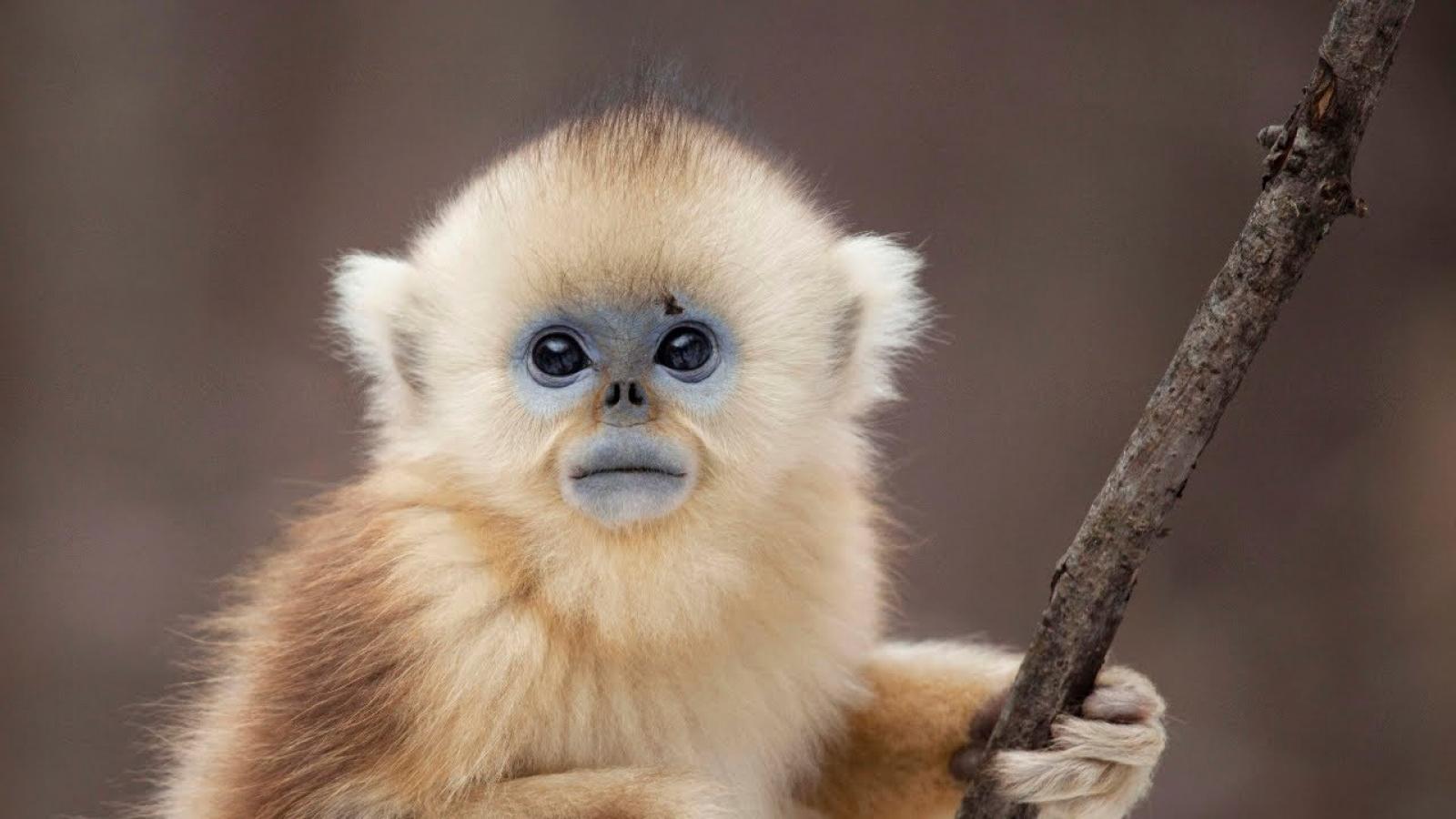 Các nhà khoa học Thái Lan thử nghiệm vaccine ngừa Covid-19 trên khỉ