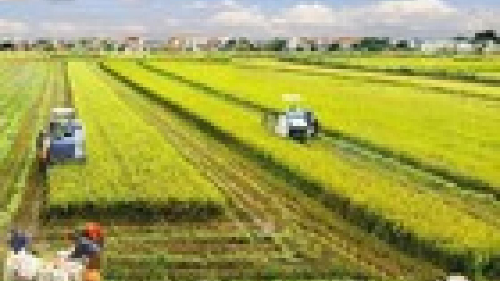 Chủ trương miễn thuế đất nông nghiệp: Không thể miễn giảm tràn lan