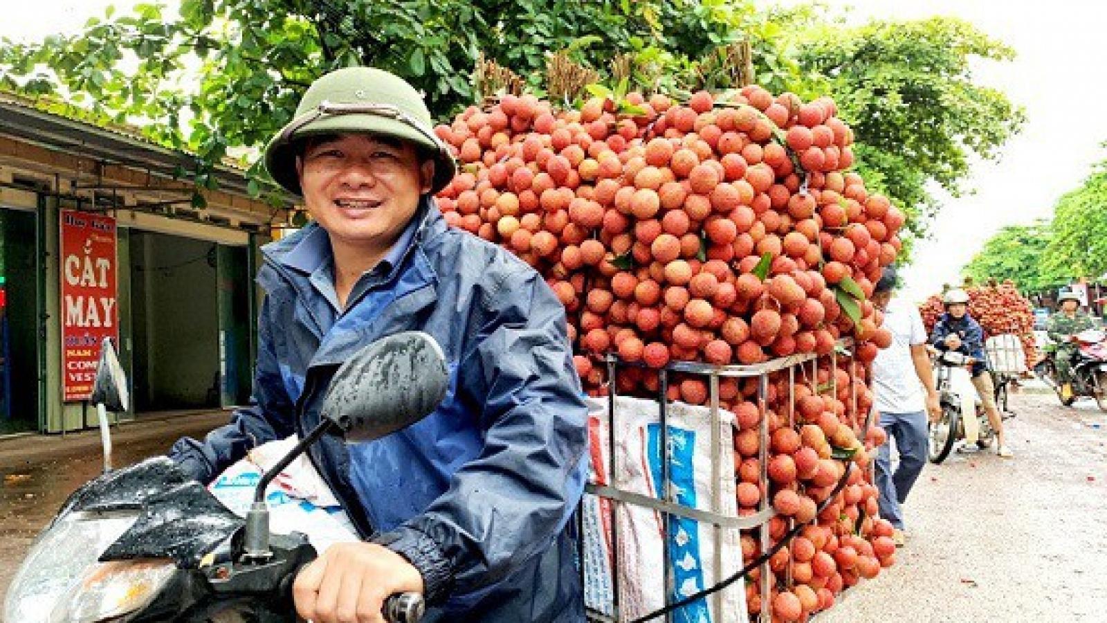 Nông dân mong chờ ngày xuất khẩu vải sang Nhật Bản