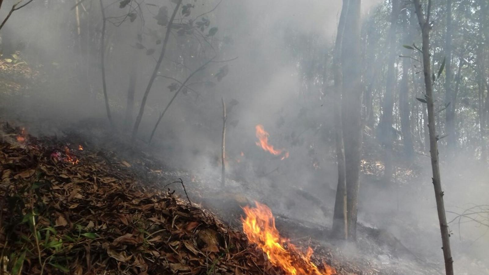Hải Phòng: 2 vụ cháy rừng liên tiếp trong ngày do nắng nóng