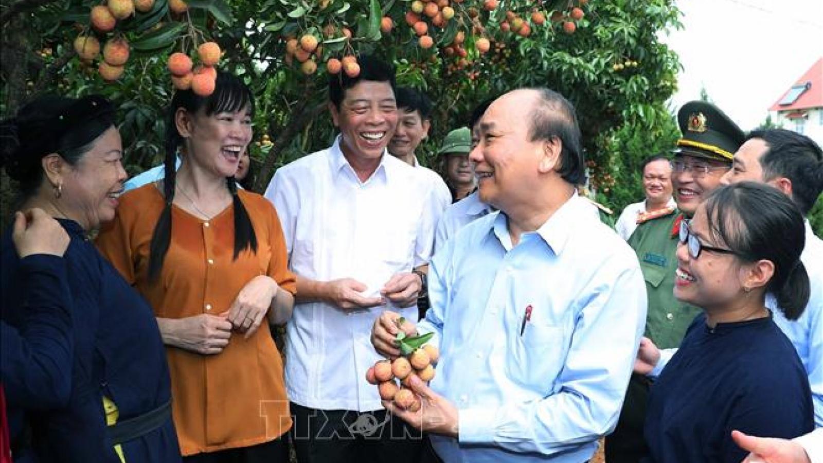 Thủ tướng dự lễ xuất khẩu vải thiều sang các thị trường lớn