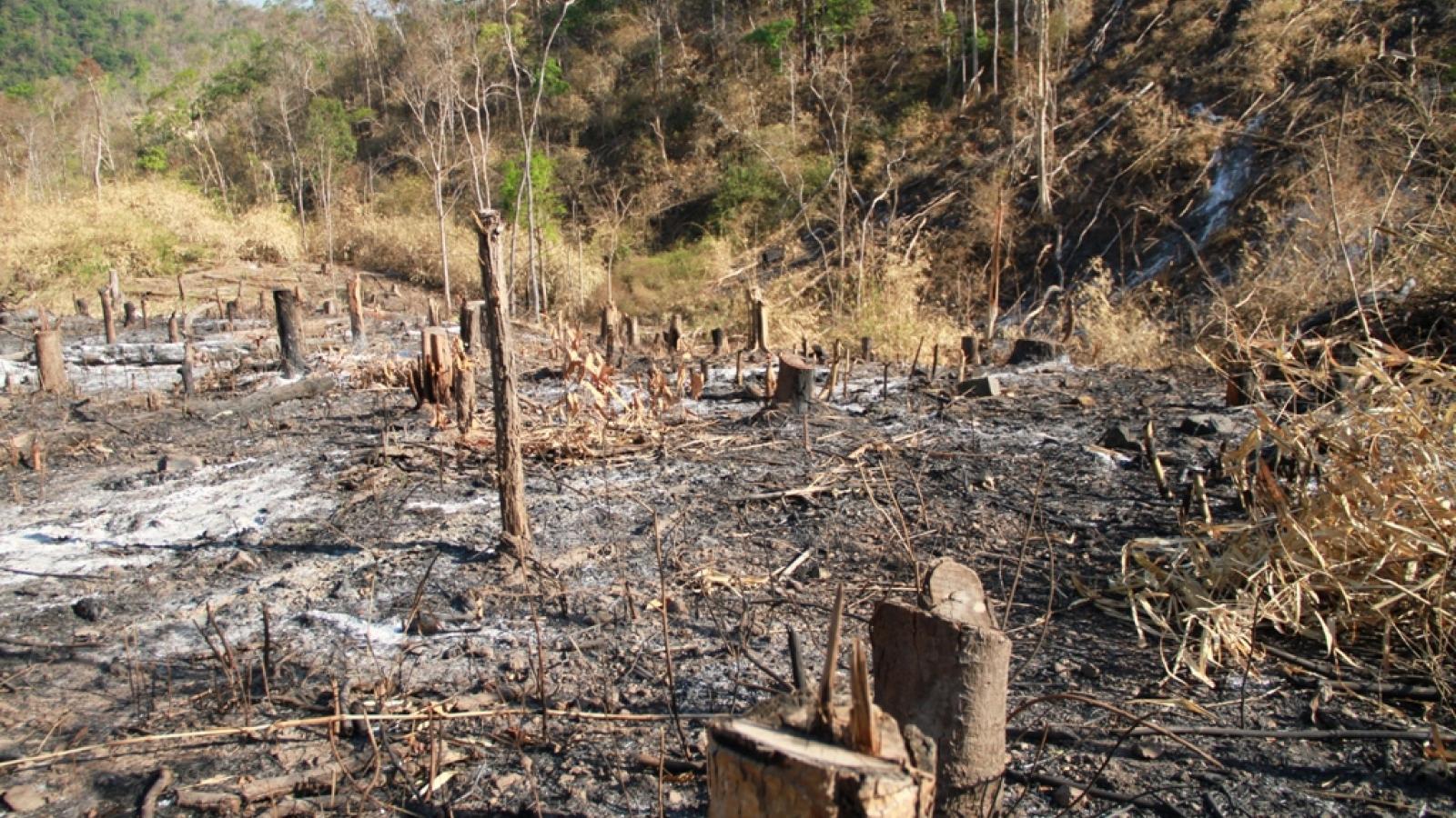 Tây Nguyên mất gần 16.000ha rừng tự nhiên trong năm 2019