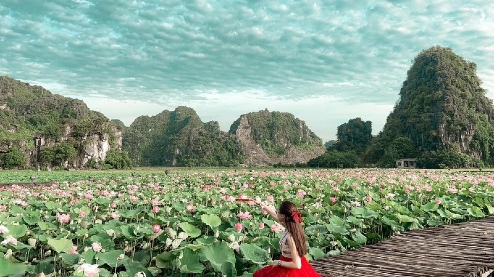 Sen miền Bắc đã tàn, hồ sen Ninh Bình vẫn nở rộ hút khách du lịch