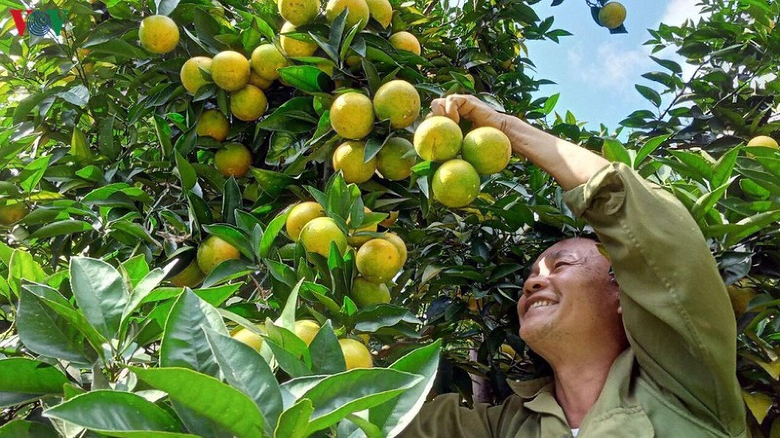 EVFTA là cơ hội mới cho nông sản Sơn La vươn xa