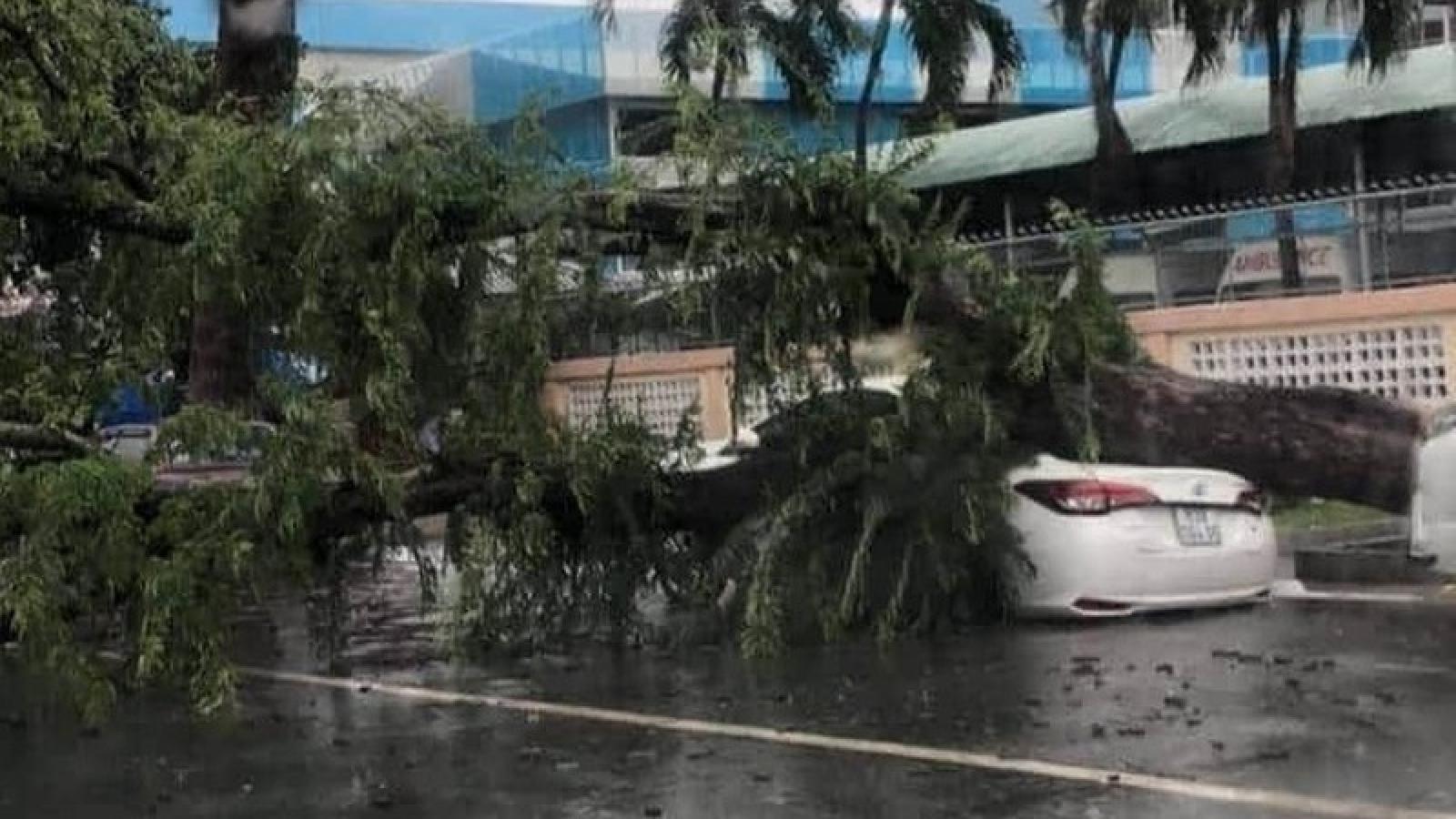 Tiền Giang: Mưa lớn làm cây me cổ thụ đổ ngã đè ô tô