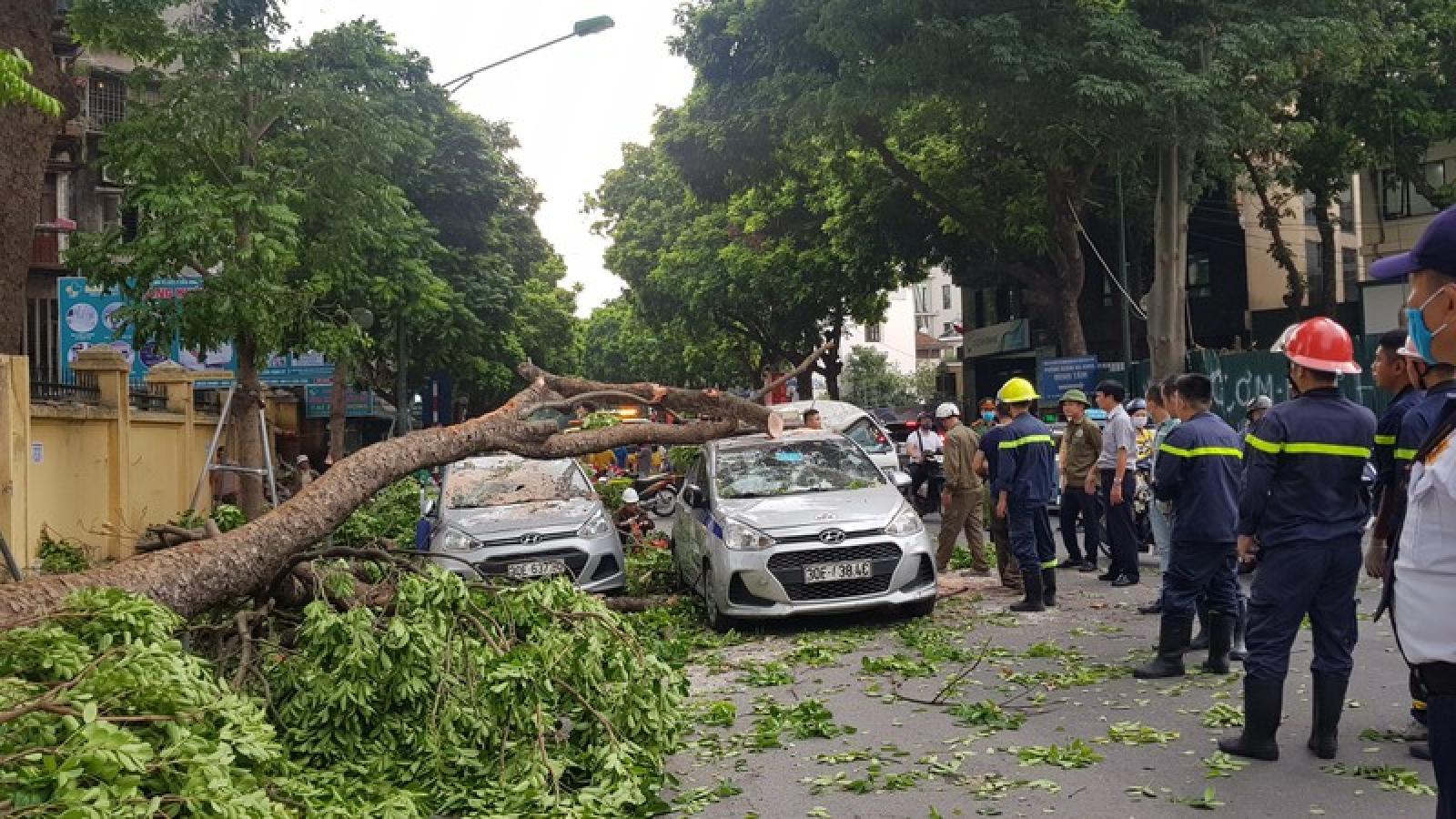 Cây cổ thụ đổ đè 3 ô tô cạnh cổng Bệnh viện 108 Hà Nội