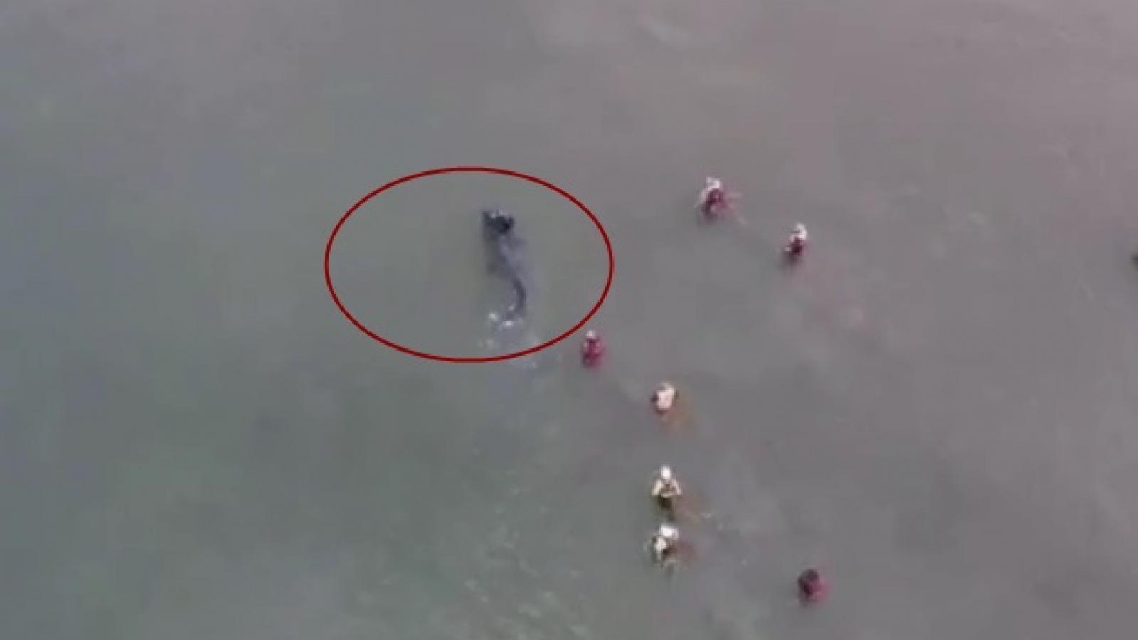 Video ghi cảnh cá mập bơi sát bờ biển Yorkshire (Anh)