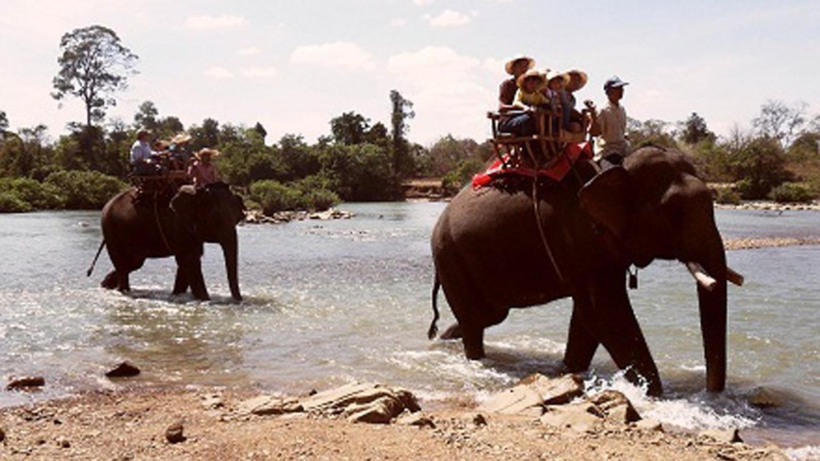 Người mẹ bị gãy xương sườn khi cưỡi voi du lịch tại Đắk Lắk
