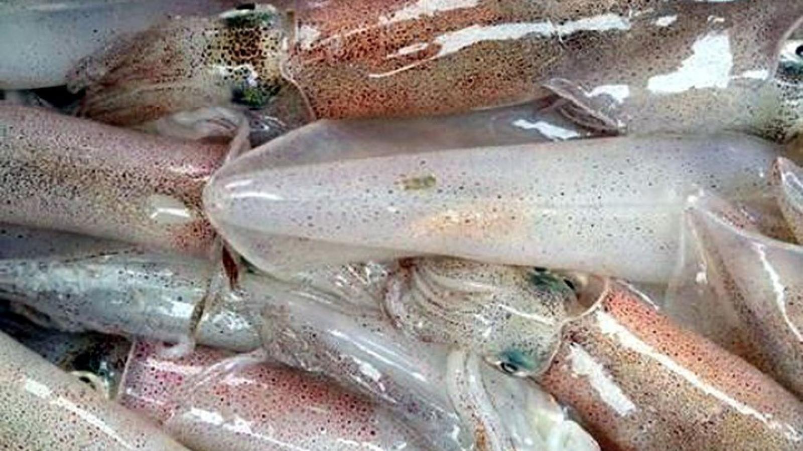 Xuất khẩu mực, bạch tuộc đạt gần 240 triệu USD