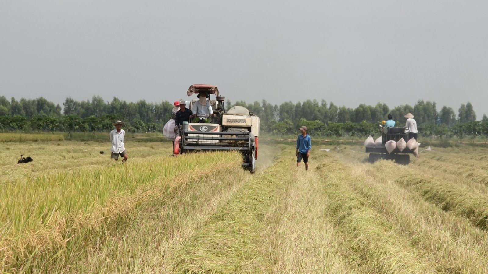 Vụ lúa Hè thu được mùa, được giá, nông dân Hậu Giang phấn khởi