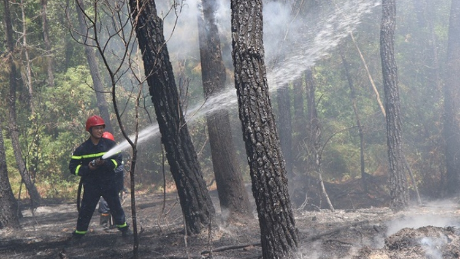 Thừa Thiên Huế kịp thời dập tắt vụ cháy rừng thông