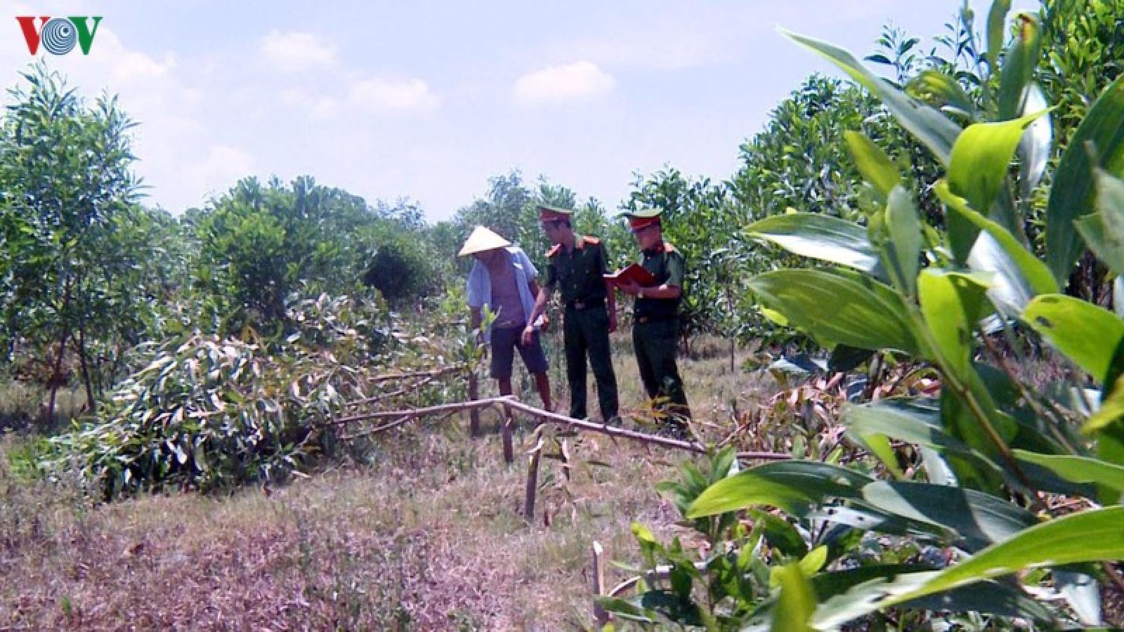 3 đối tượng chặt phá hơn 700 cây keo của hàng xóm để trả thù