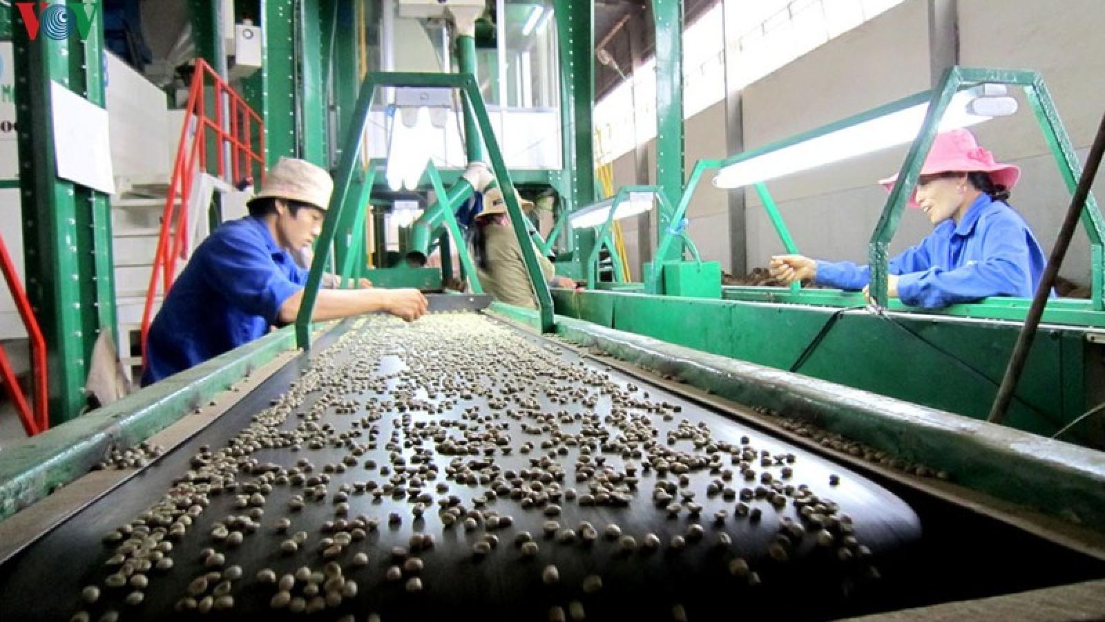 Đăk Lăk dành 42 tỷ đồng hỗ trợ lãi suất cho DN đầu tư vào nông nghiệp