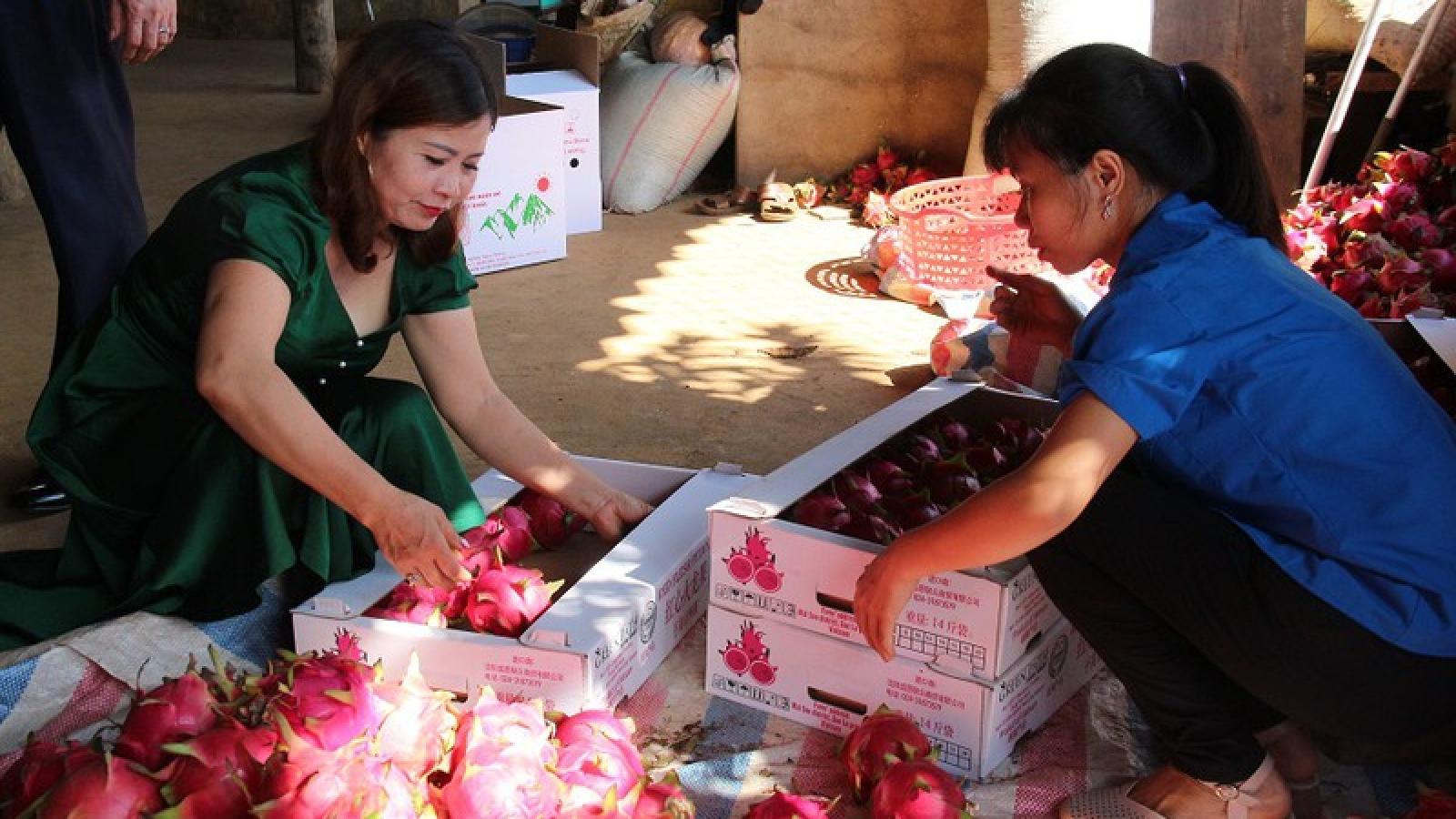 10 tấn thanh long ruột đỏ của Sơn La xuất khẩu sang thị trường Nga
