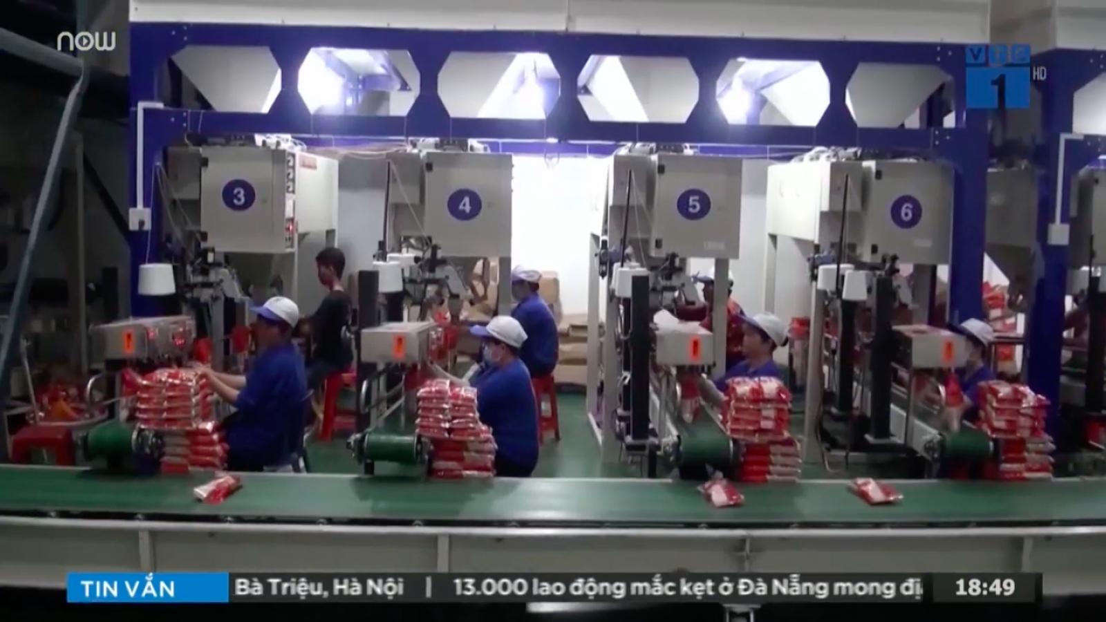 """Giá gạo Việt lên """"như diều gặp gió"""" nhờ hiệu ứng EVFTA"""
