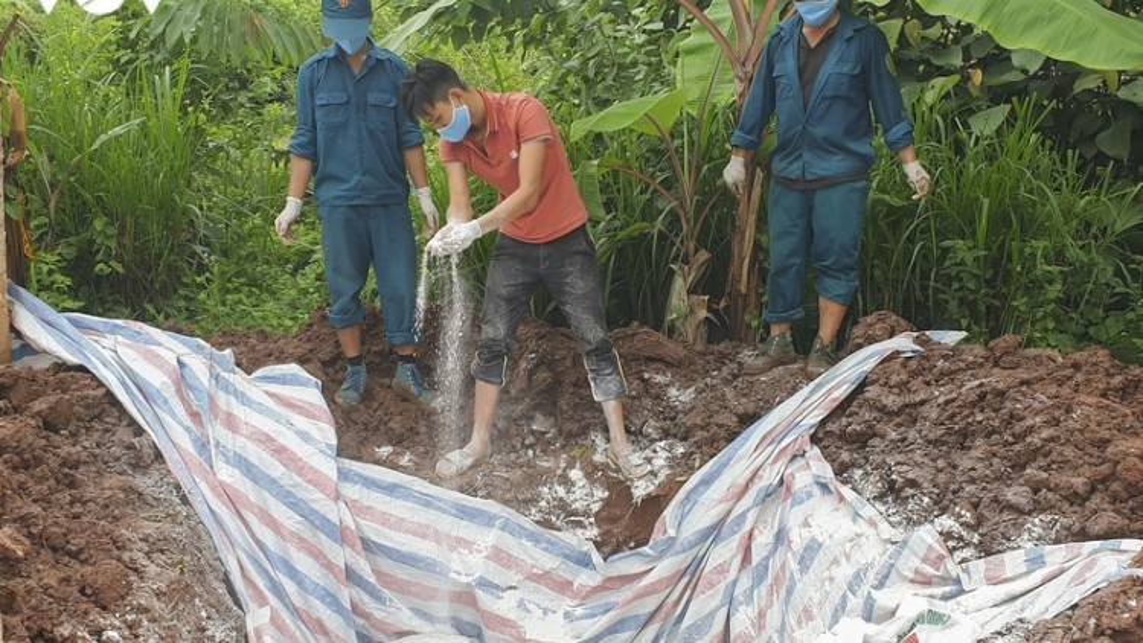 Fresh African swine fever outbreak detected in Dien Bien