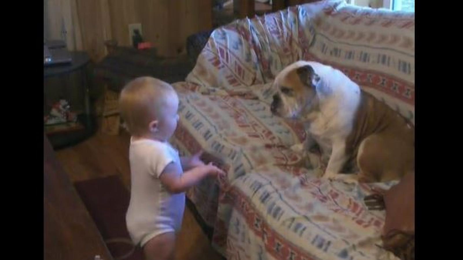 """Video: Bật cười trước """"cuộc cãi vã"""" om sòm giữa em bé và chú chó Bull"""