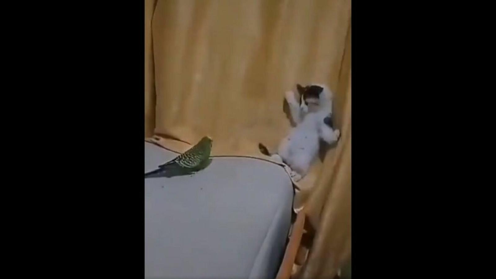Video: Mèo con hoảng hốt né tránh khi vẹt đuôi dài đến gần