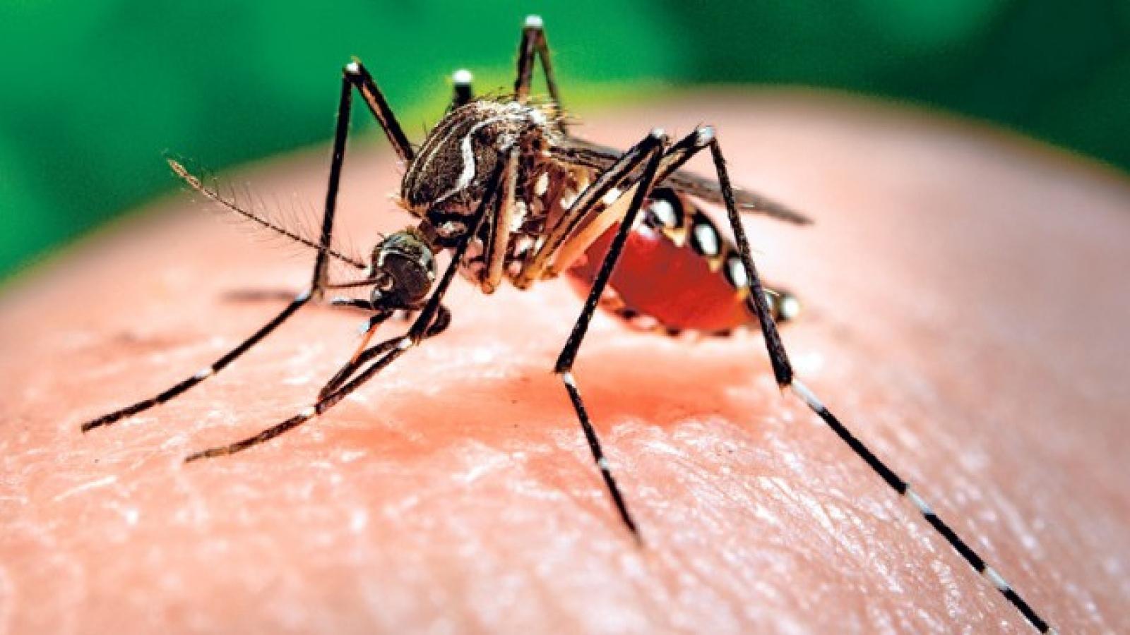 Bình Phước chủ động phòng chống dịch bệnh Chikungunya