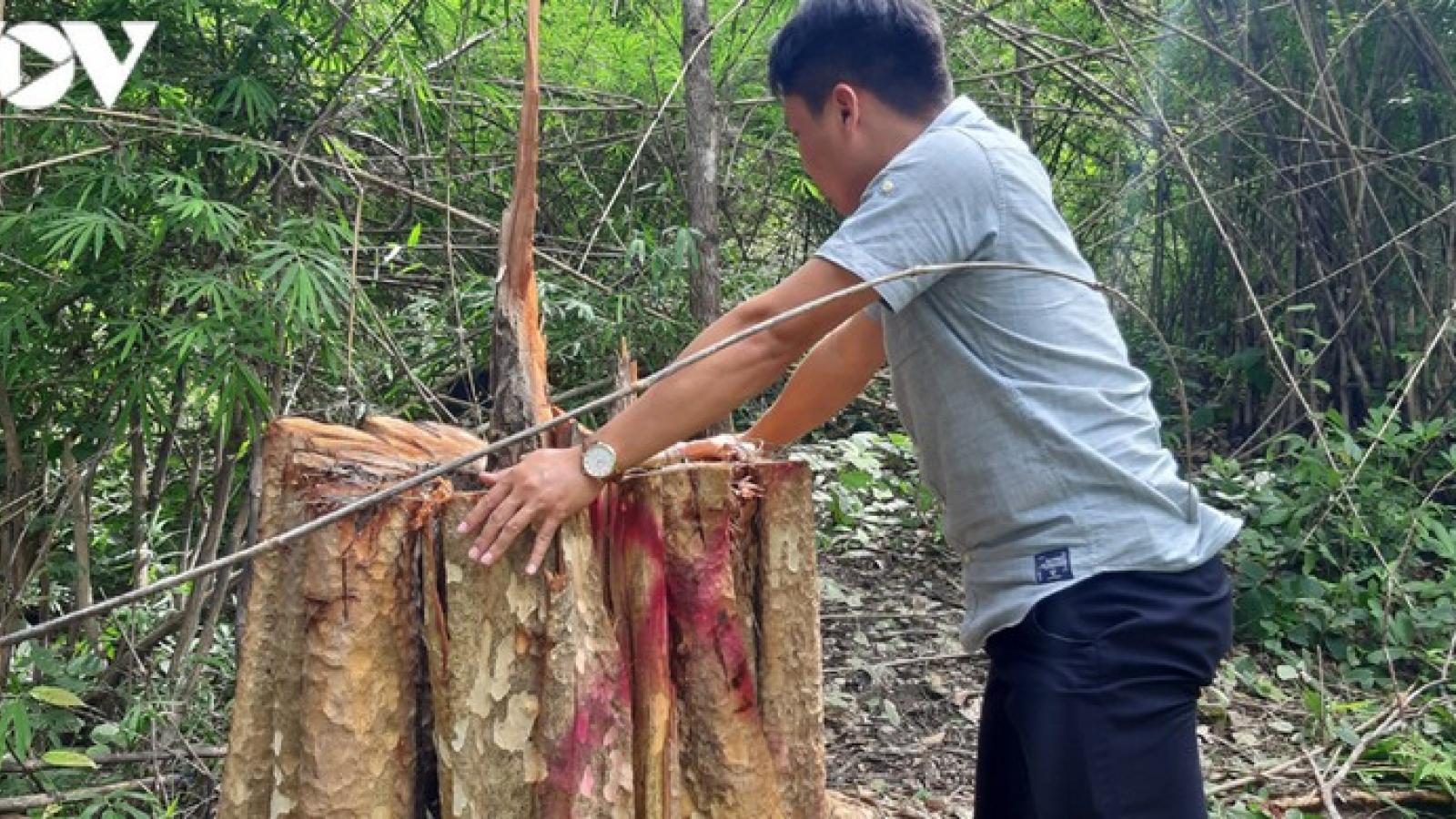 Bắt giữ 2 ôtô và 13 xe độ chế trong vụ phá rừng biên giới Gia Lai