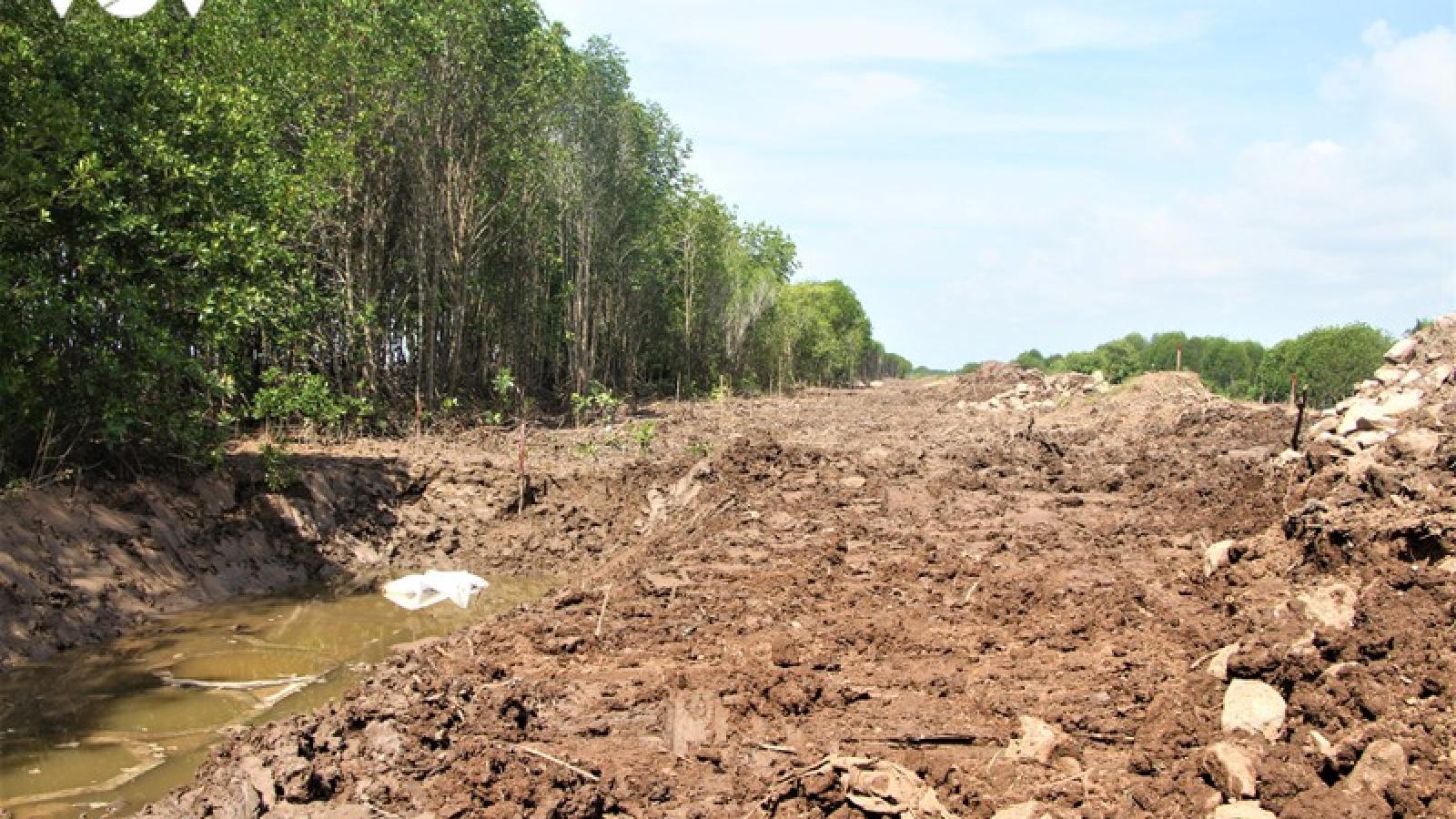 Doanh nghiệp phá rừng phòng hộ để xây dựng công trình đê biển