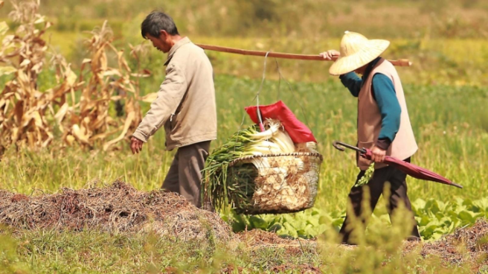 Trung Quốc có thể thiếu 130 triệu tấn lương thực vào cuối giai đoạn 2021-2025