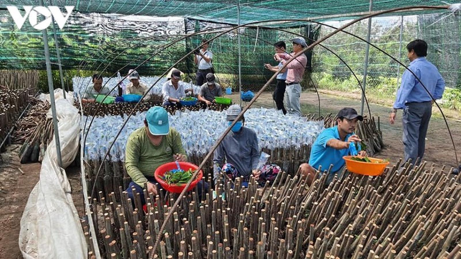 Thu nhập của người dân Chợ Lách (Bến Tre) tăng hơn 3 lần nhờ nông thôn mới