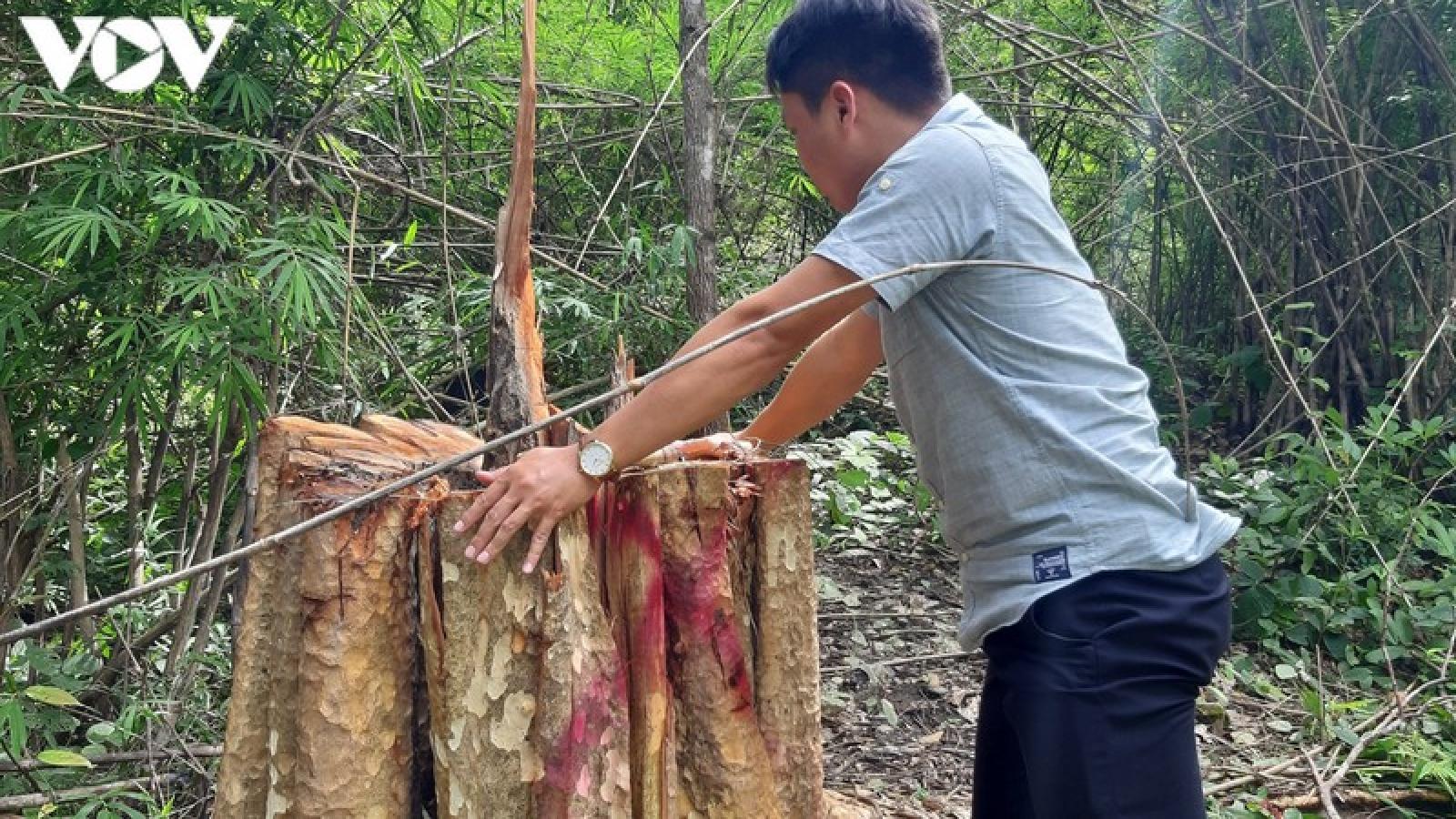 Rừng bị tàn phá ở Gia Lai: Đoàn kiểm tra chỉ phát hiện 7 cây gỗ