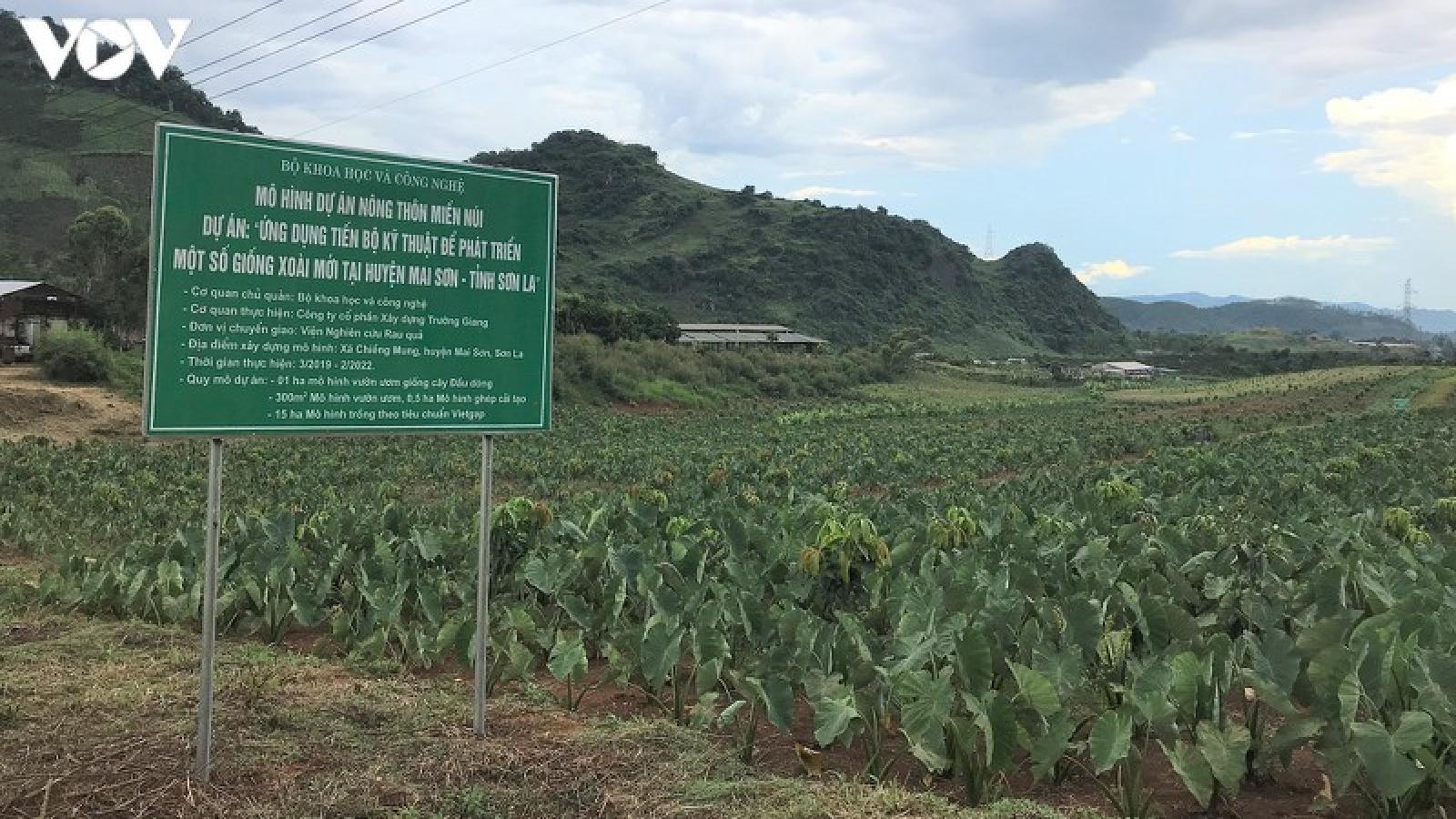 """Đất núi Sơn La hóa """"vàng"""" nhờ ứng dụng khoa học công nghệ"""