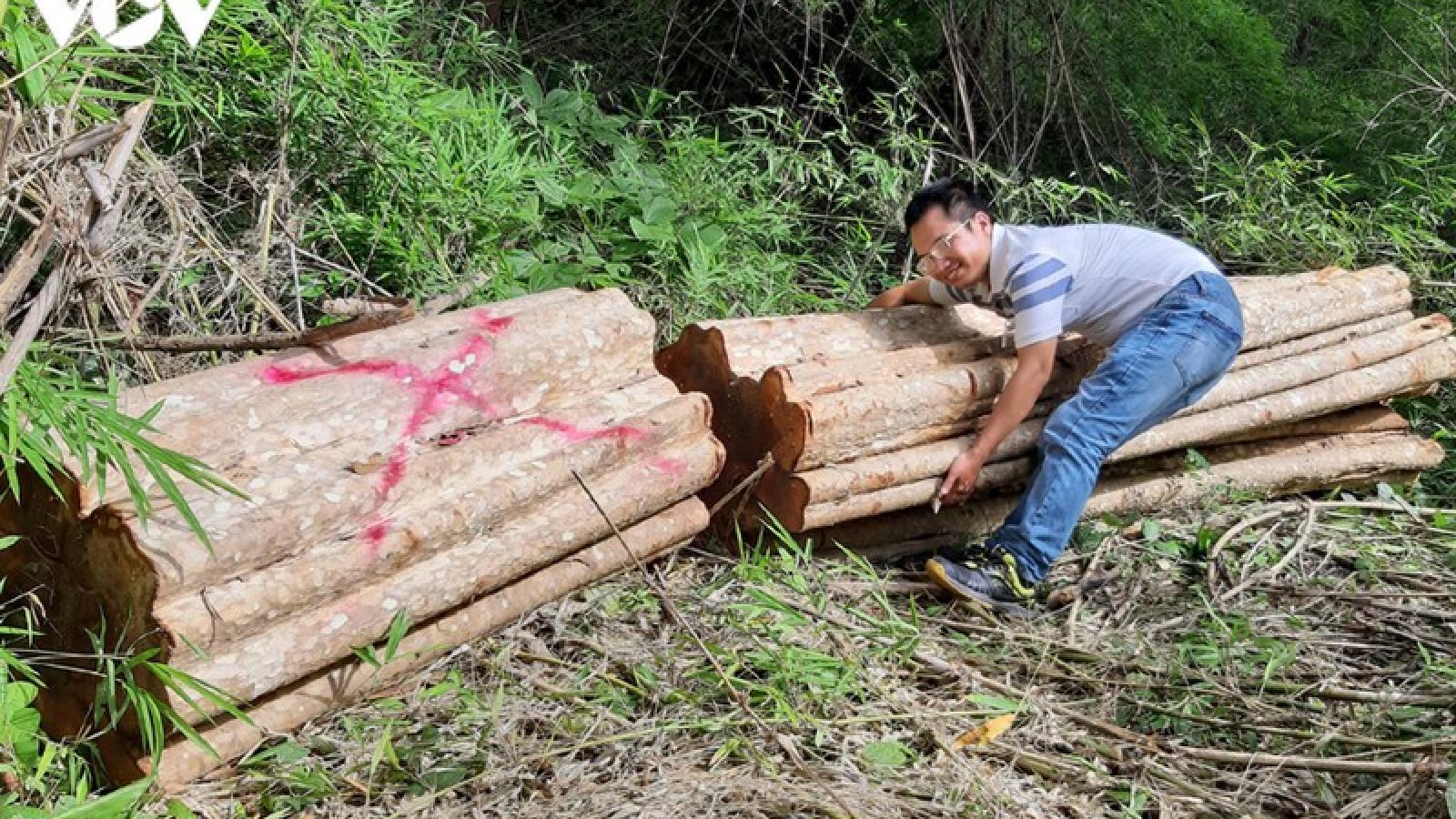 UBND tỉnh Gia Lai yêu cầu điều tra vụ phá rừng ở biên giới Chư Prông