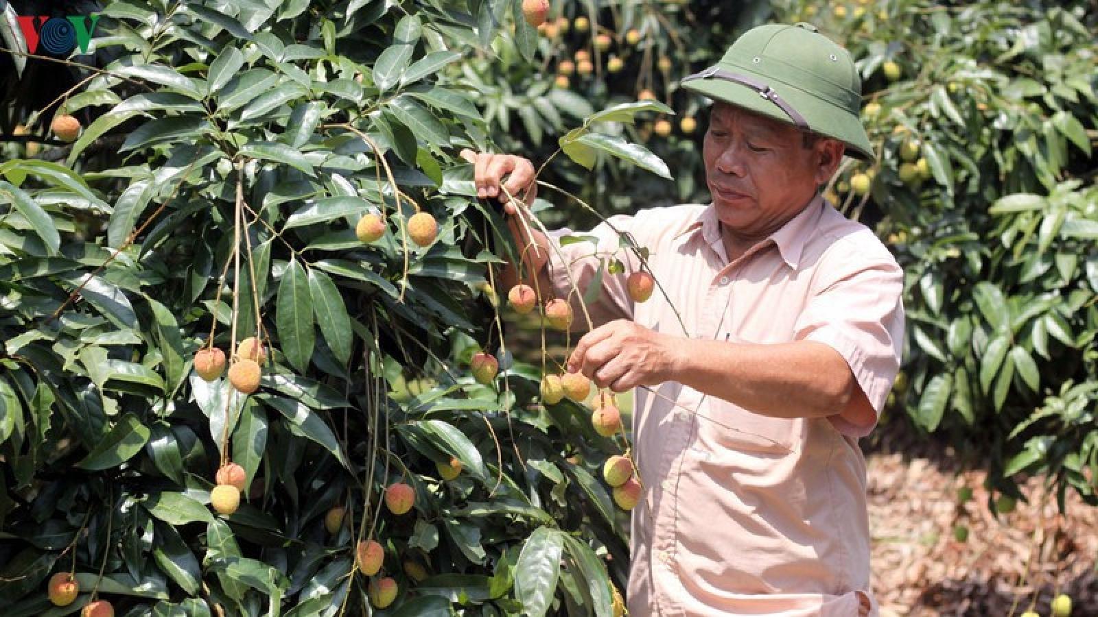 Việt Nam - Trung Quốc tháo gỡ khó khăn tiêu thụ nông sản do dịch Covid-19