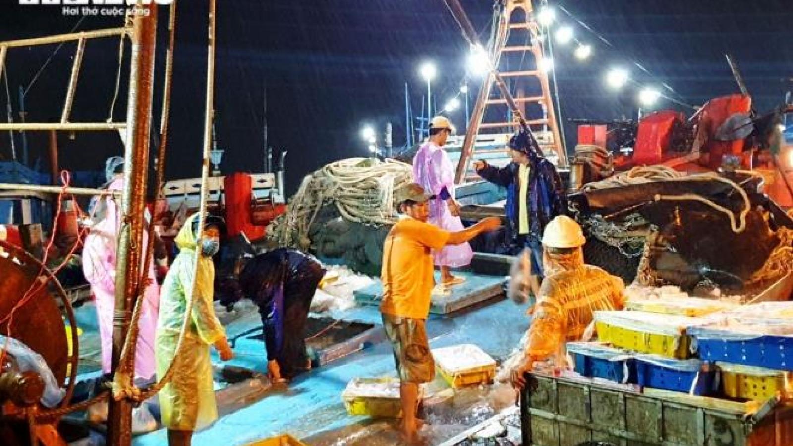 Hàng chục tàu thuyền cập bến Đà Nẵng, ngư dân đội mưa bốc cá trước bão số 5 đổ bộ