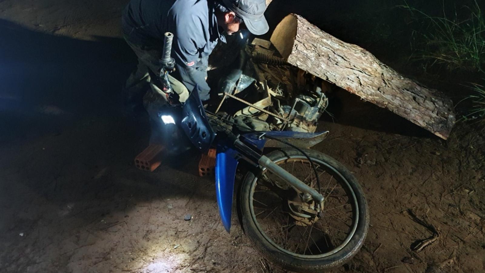 Lâm Đồng: Mật phục bắt quả tang hai đối tượng phá rừng và vận chuyển gỗ trái phép